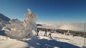 Des sculptures de neige naturelles